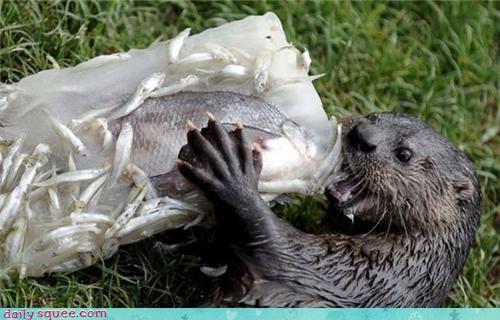 nom Om Nom Monday otter - 3797730816