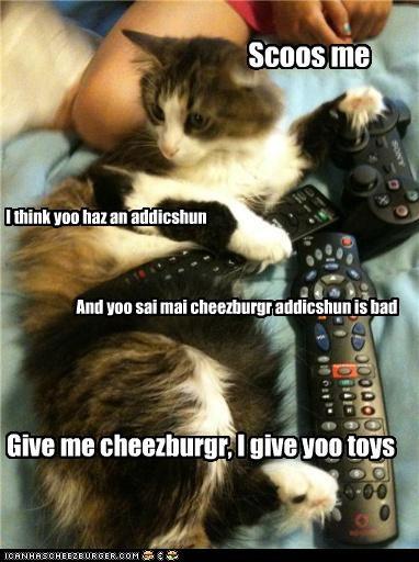 Cheezburger Image 3798139392