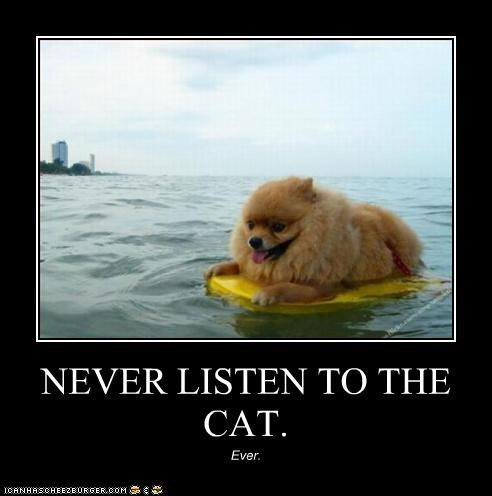 NEVER LISTEN TO THE CAT. Ever.