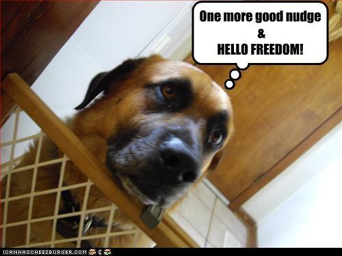 One more good nudge & HELLO FREEDOM!