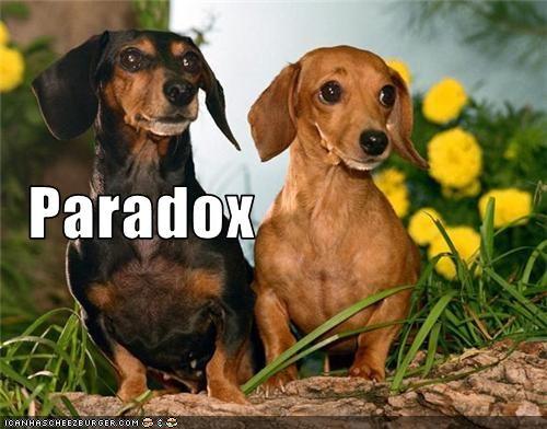 cute dachshunds paradox pun - 3800063744