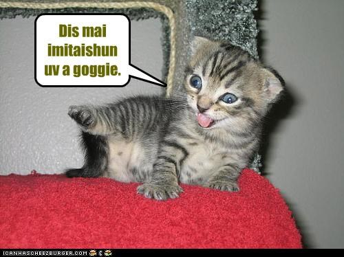 caption captioned cat dopey goggie imitation impression kitten pretending silly - 3800218624