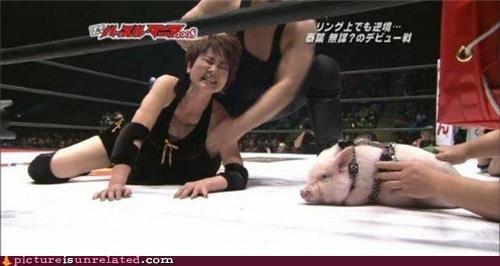 Japan pig wrestling wtf - 3800983040