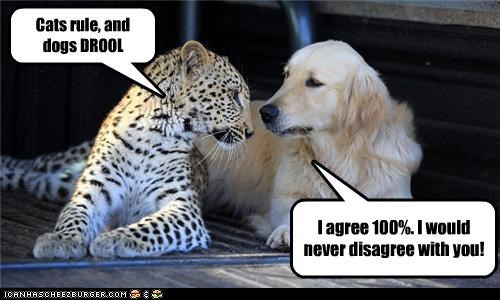 Cats rule, and dogs DROOL I agree 100%. I would never disagree with you!