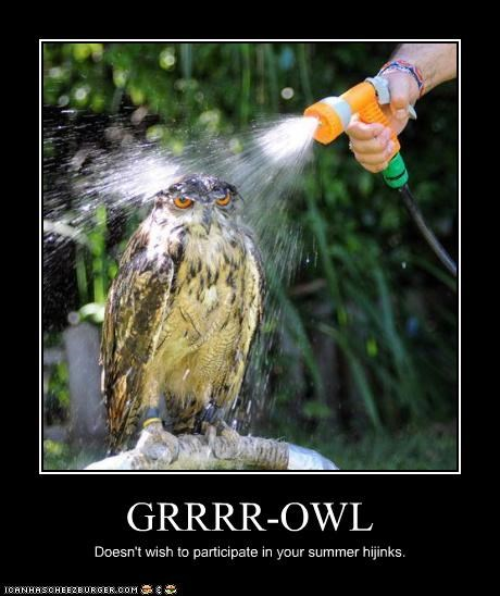 GRRRR-OWL Doesn't wish to participate in your summer hijinks.