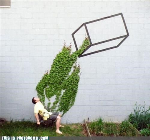graffiti,ivy,Moment Of Win,nature,vines