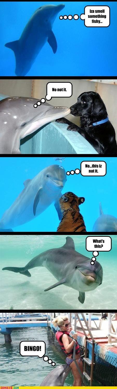 animals babes dolphins women - 3801696256