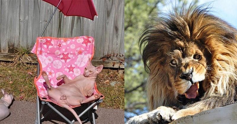 fotos feas animales