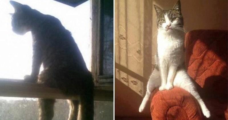 fotos gatos en dos