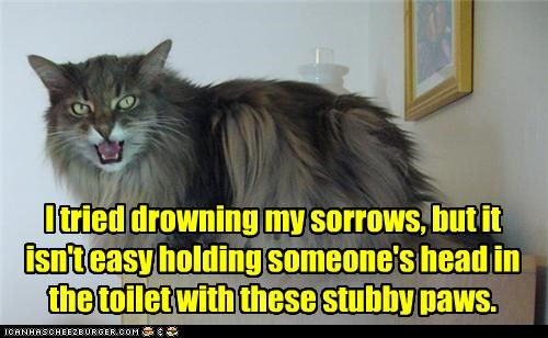 angry,caption,captioned,cat,difficult,drowning,failing,Hall of Fame,hard,literalism,paws,problems,sorrows,stubby,trying