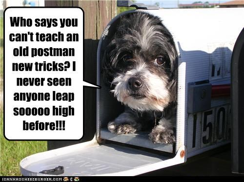 cute havanese mailbox postman prank scaring trick - 3803239424