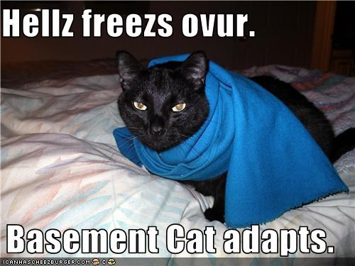 basement cat blanket caption cold - 3804358912