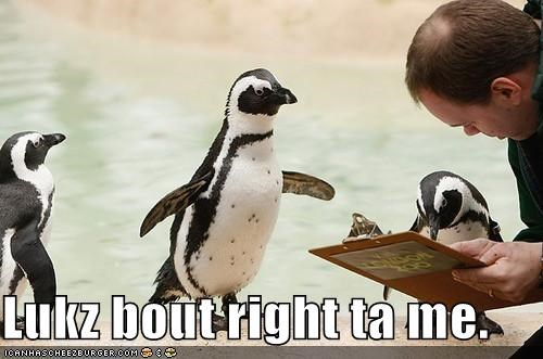caption,lolbirds,lolpenguins
