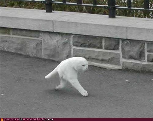 Seal-Cat takes a stroll