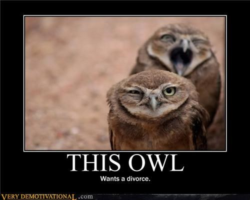 animals,anthropomorphizing,cute,divorce,facts of life,Hall of Fame,hilarious,marriage,owls,Sad