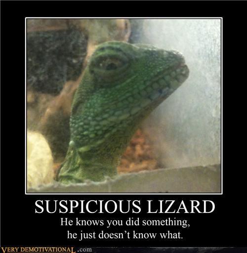 wtf suspicious lizard funny - 3805992704