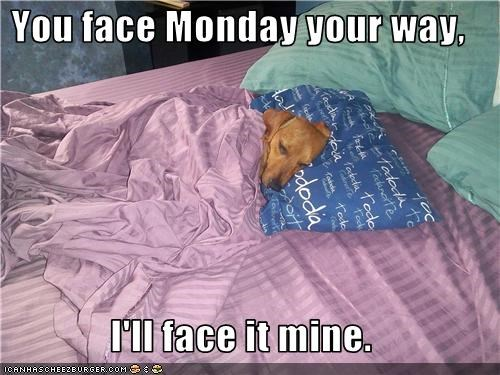 bed blankets dachshund face the day monday Monday morning Pillow sleeping start of the week wake up - 3806114816