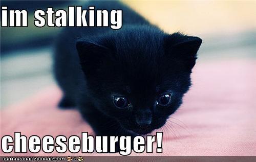 Cheezburger Image 3806409216