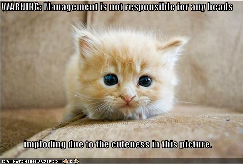 cute cyoot kitteh of teh day kitten omg - 3806459392