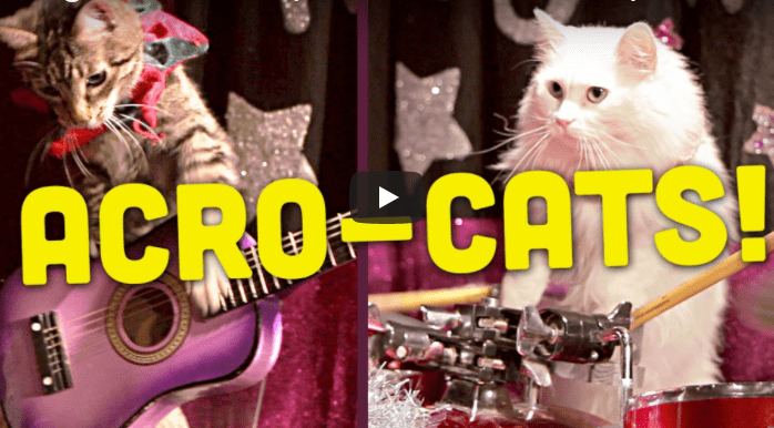 cat circus donates money to stray cats
