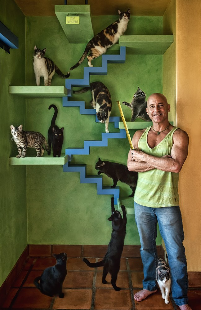 beautiful home design for cats