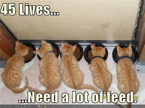 caption cute fud kitten nom nom nom - 3808045824