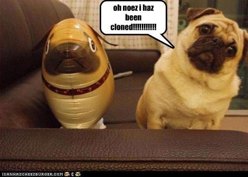 Cheezburger Image 3808419072