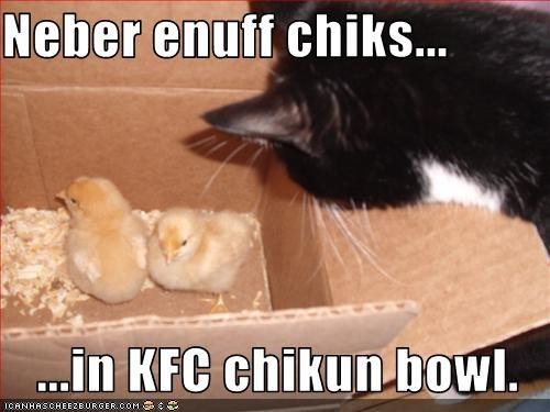 Cheezburger Image 3808434944