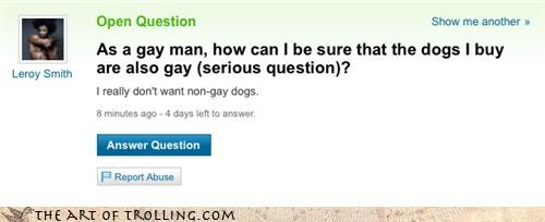 dogs,gay,pets,prejudice,sexy times,Yahoo Answer Fails
