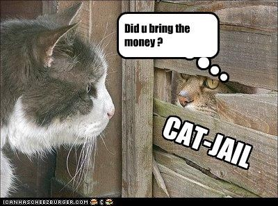 Did u bring the money ? CAT-JAIL