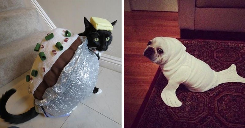 Funny and cute photos of pets in Halloween costumes, cats, dogs.