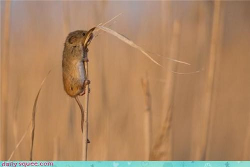 climb,field mouse,tiny