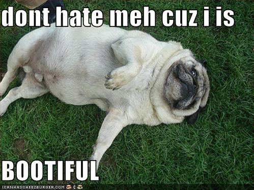 beautiful,dont-hate-me-because-im-beautiful,grass,haters,laying down,pug,silly dog