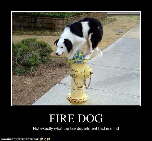 FIRE DOG Not exactly what the fire department had in mind