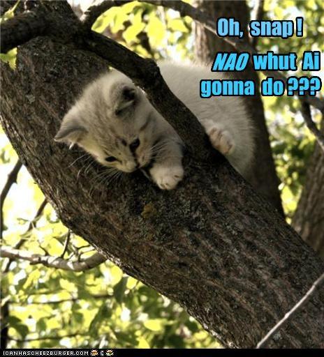Oh, snap ! whut Ai gonna do ??? NAO