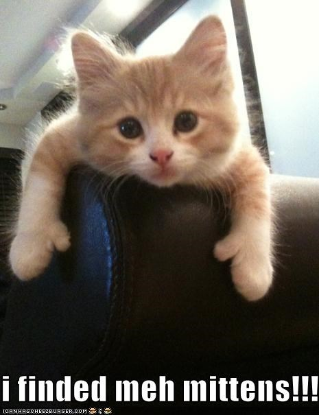 caption cute kitten mittens - 3813762560