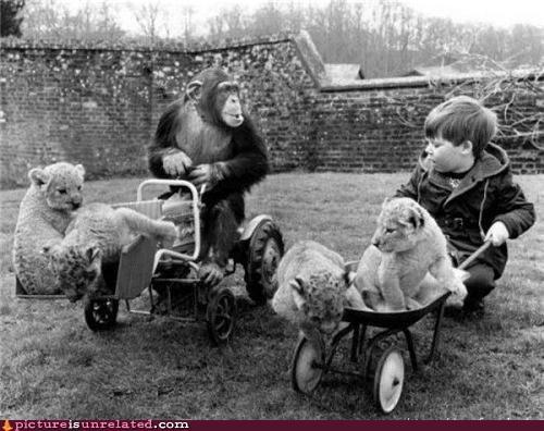 kids lions monkeys stroller wtf - 3814437376