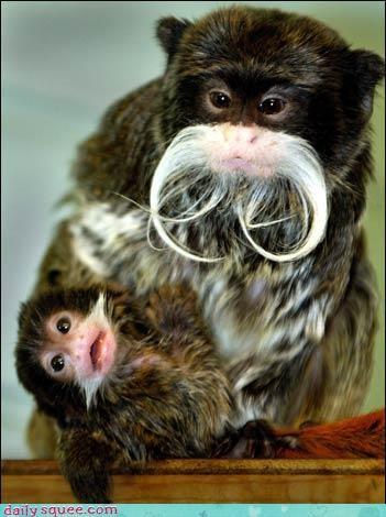 monkey nerd jokes Pokémon - 3814647040