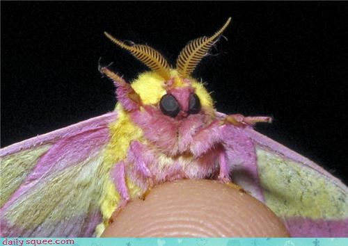 colorful Fluffy moth - 3815366656