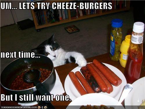 Cheezburger Image 3816060416