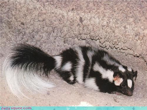 Fluffy Friday nerd jokes skunk trivia - 3816216320