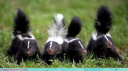 litter skunk stink - 3817465856