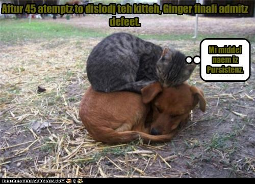 Cheezburger Image 3817494016