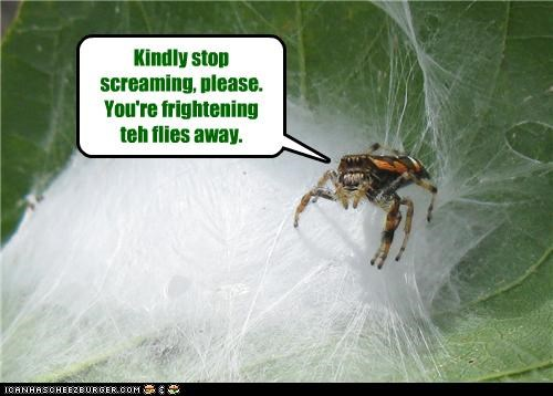 asking caption captioned flies frightening please scaring screaming shocked spider stop terrified web