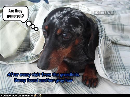 dachshund,grandchildren,gray hair,hiding,sadness,stress