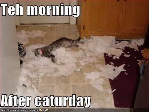 bad cat caption Caturday destruction mess