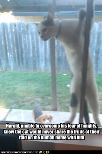 Harold, unable to overcome his fear of heights, knew the cat would never share the fruits of their raid on the human home with him