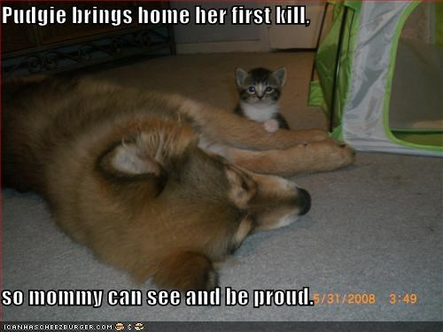 caption,dogs,kill,kitten,mommy,proud,trophy
