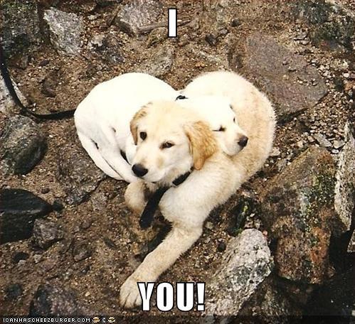 awesome cuddling cute Hall of Fame heart shape love - 3819727360