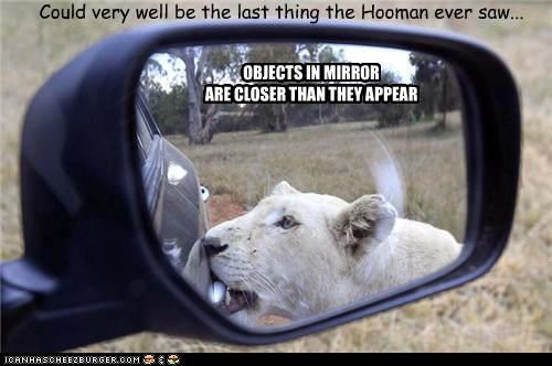 OBJECTS IN MIRROR ARE CLOSER THAN THEY APPEAR Could very well be the last thing the Hooman ever saw...